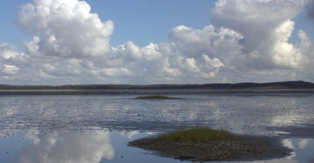 Quiz og Byt om Vadehavet